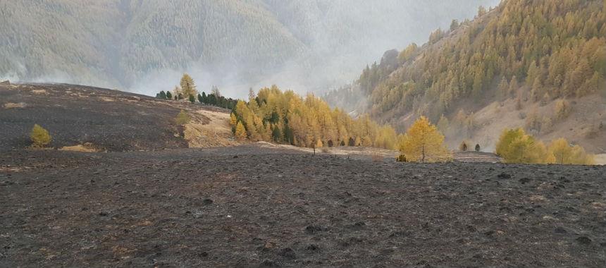 Dopo gli incendi, come stanno i nostri boschi?