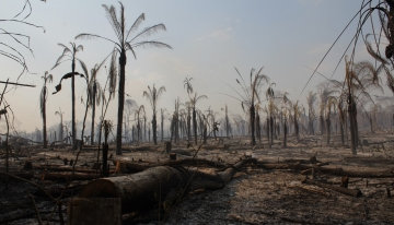 Foreste, come reagiscono agli incendi