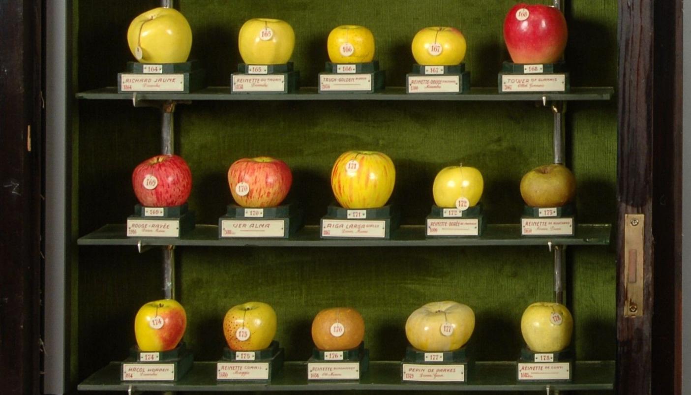 Quante Varietà Di Rose Esistono il piemonte che conserva antichi frutti - #piemonteparchi