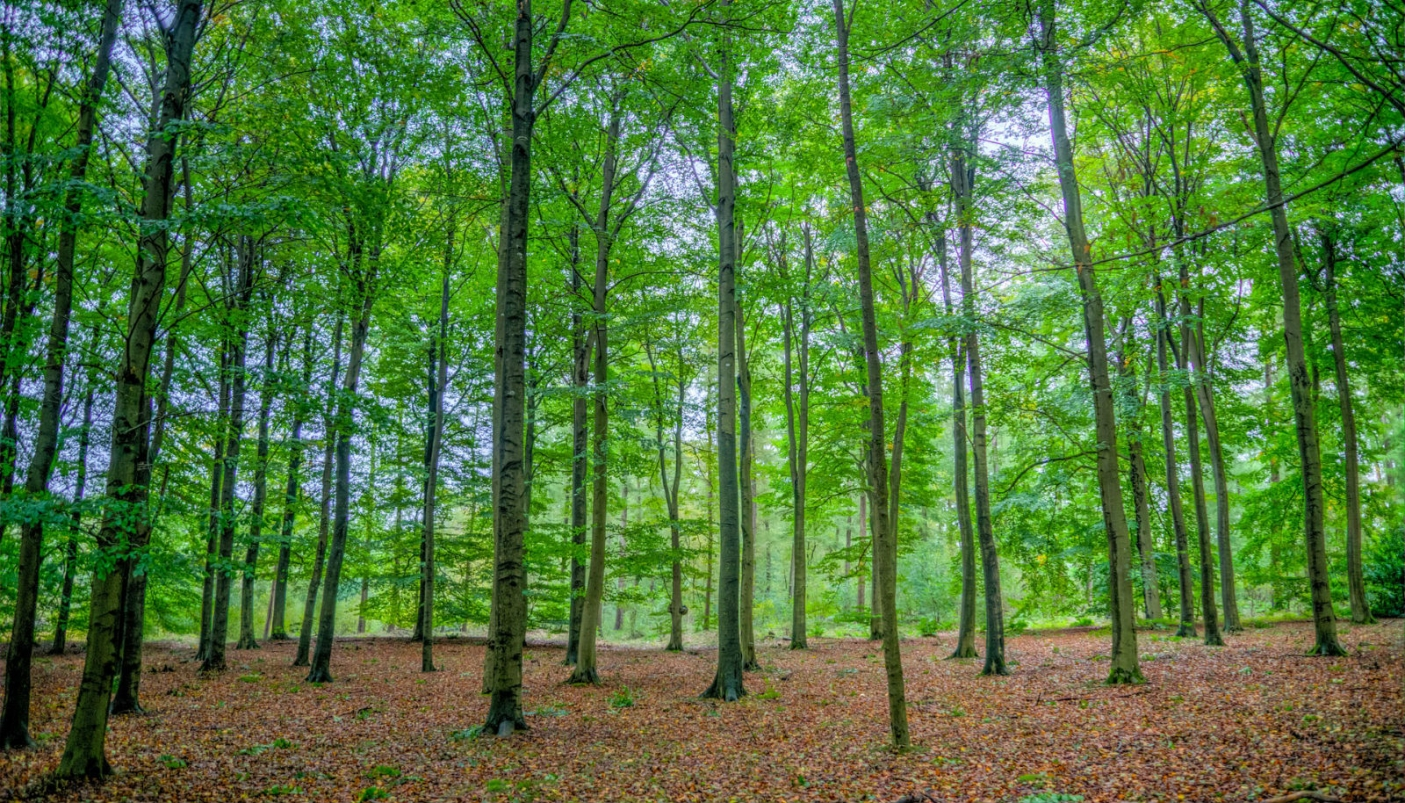 Alberi Ad Alto Fusto Quali Sono governo del bosco: meglio ceduo, fustaia o misto