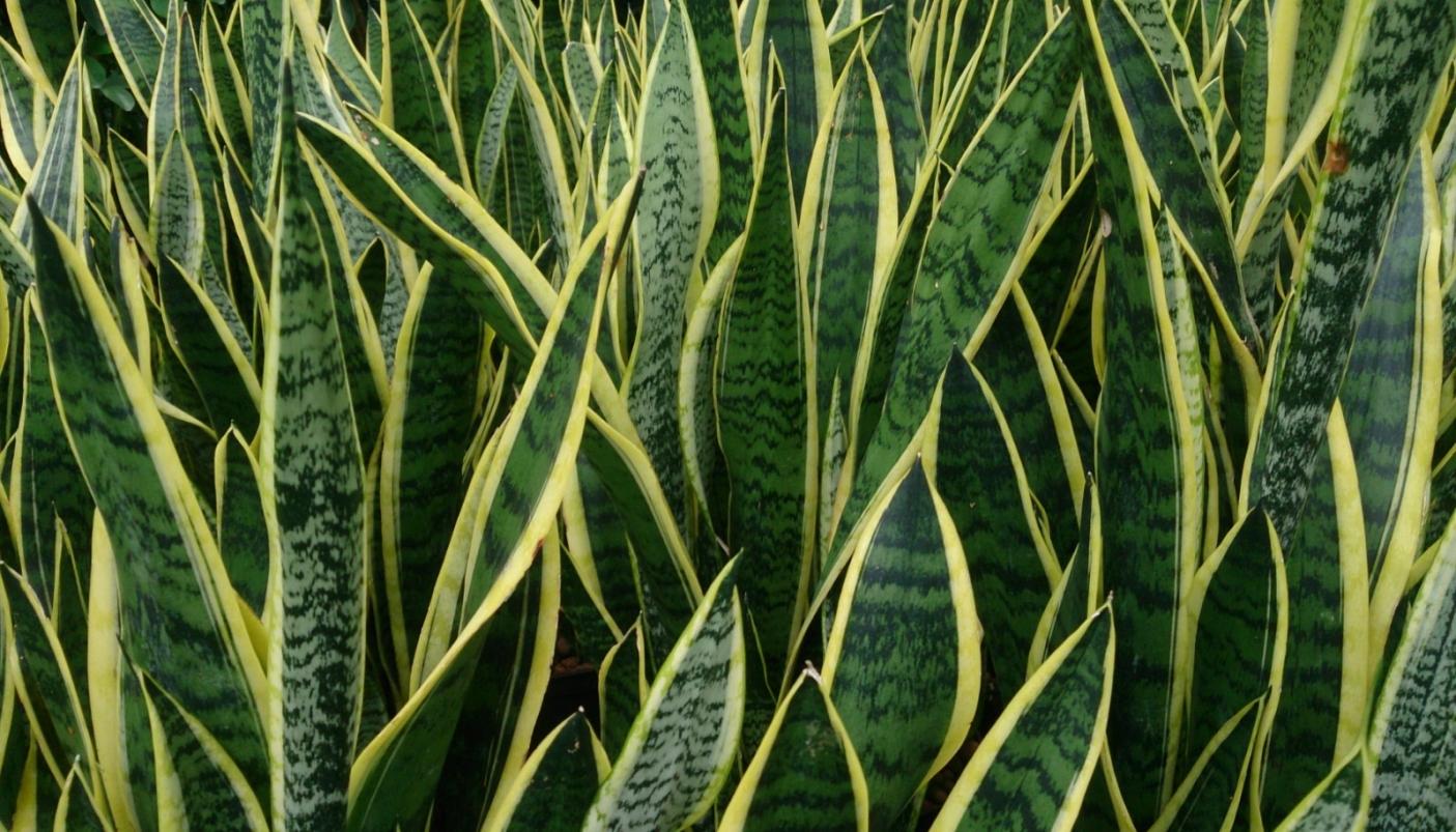 Piante Strane Da Appartamento le piante in casa migliorano l'aria - #piemonteparchi
